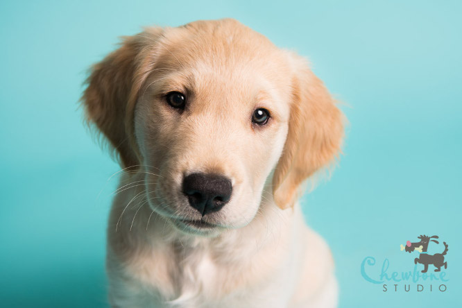 Why Are Professional Puppy Pictures Important?