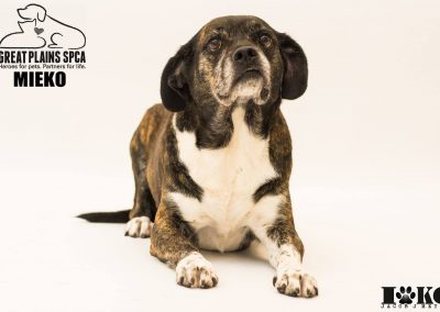 Vinyl Backdrops: An Essential for Pet Photography