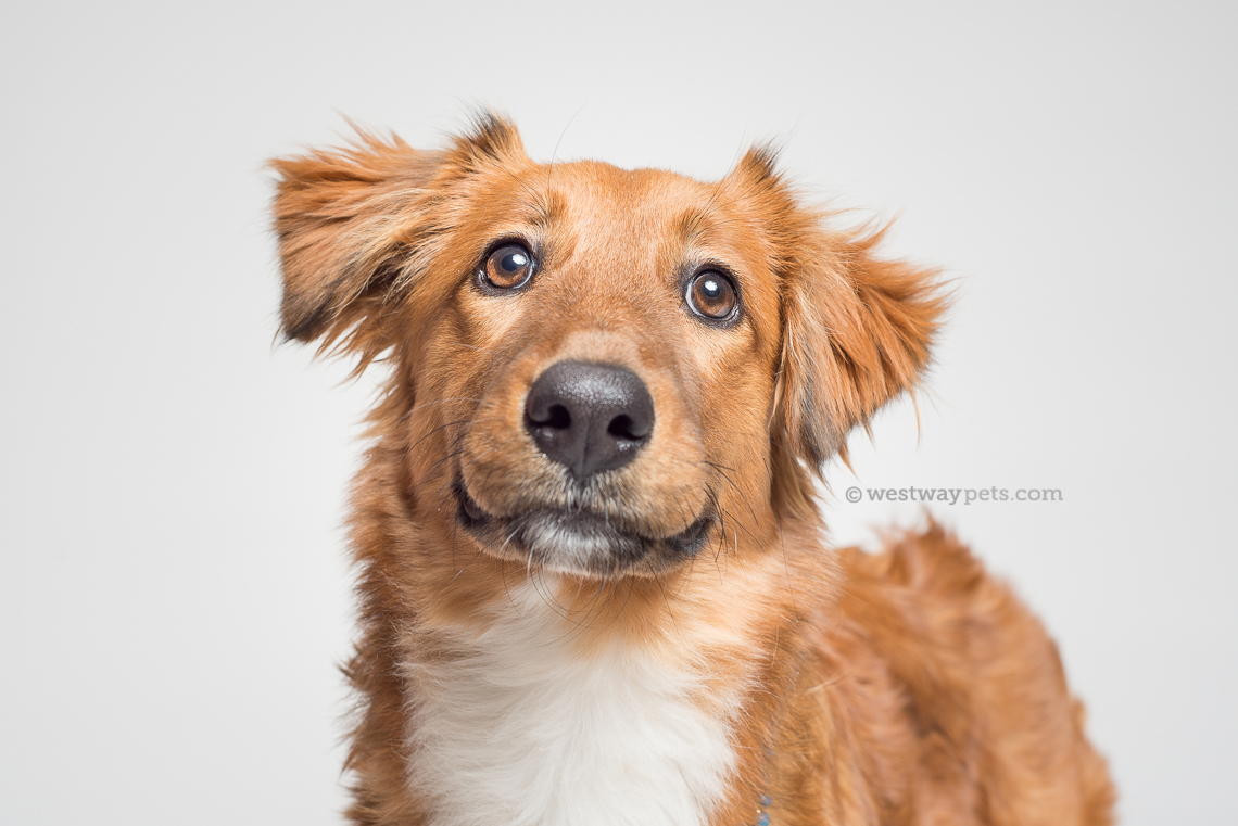 shelter animal portrait on savage seamless paper by terran bayer photography