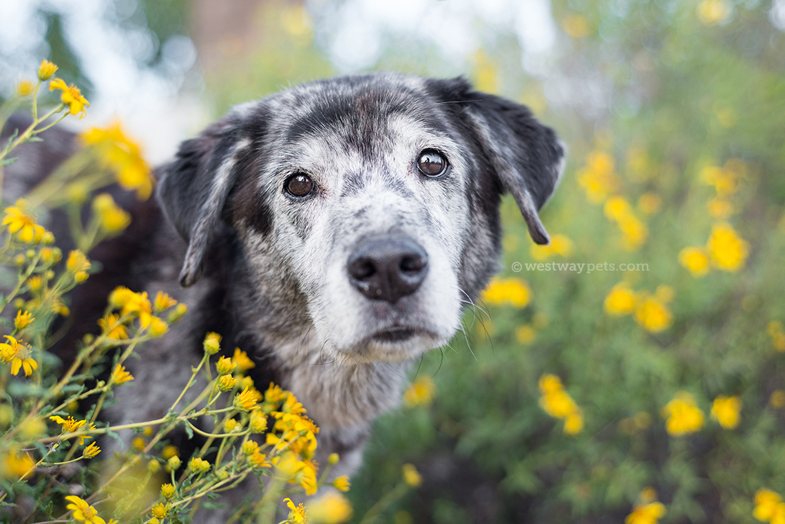 shelter animal portrait by terran bayer photography