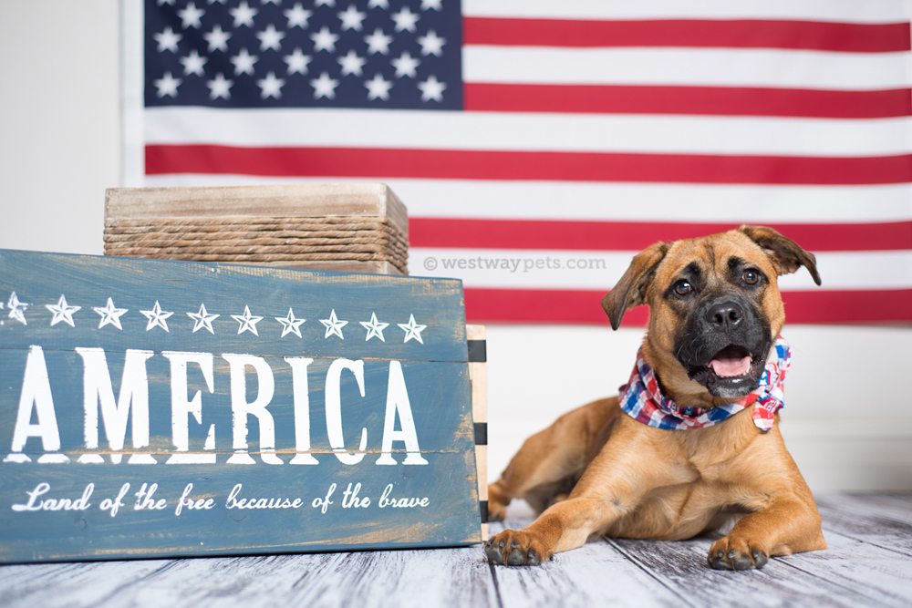 Patriotic Portraits: All American Pet Photo Day with Westway Studio