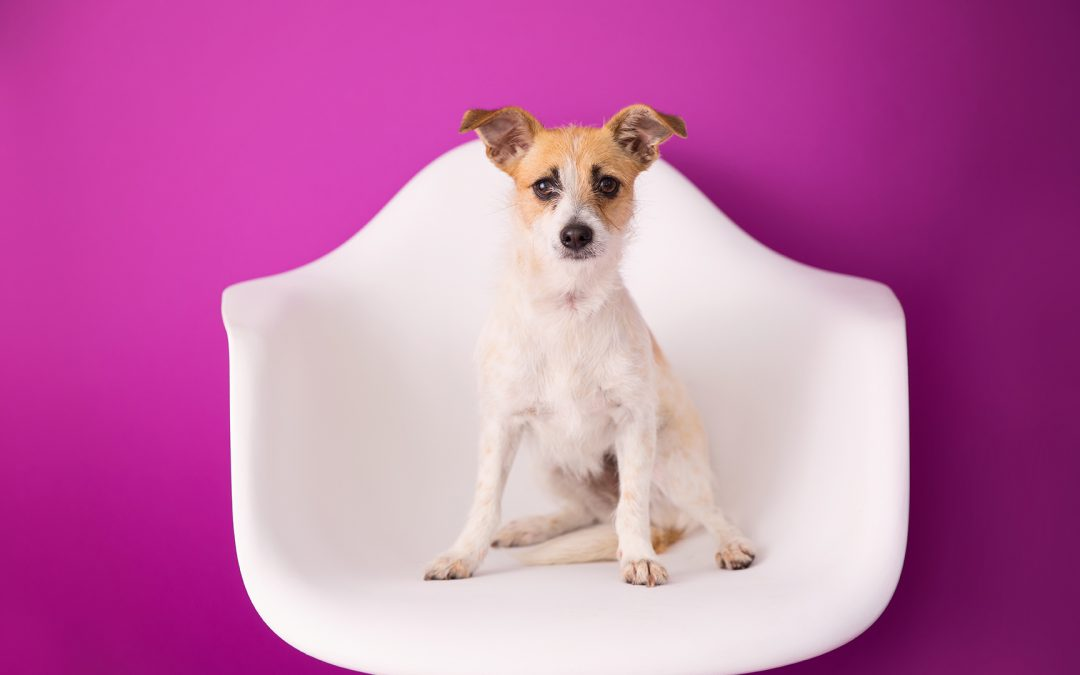 Plum Seamless Paper: A Bold Background for Pet Adoption Portraits