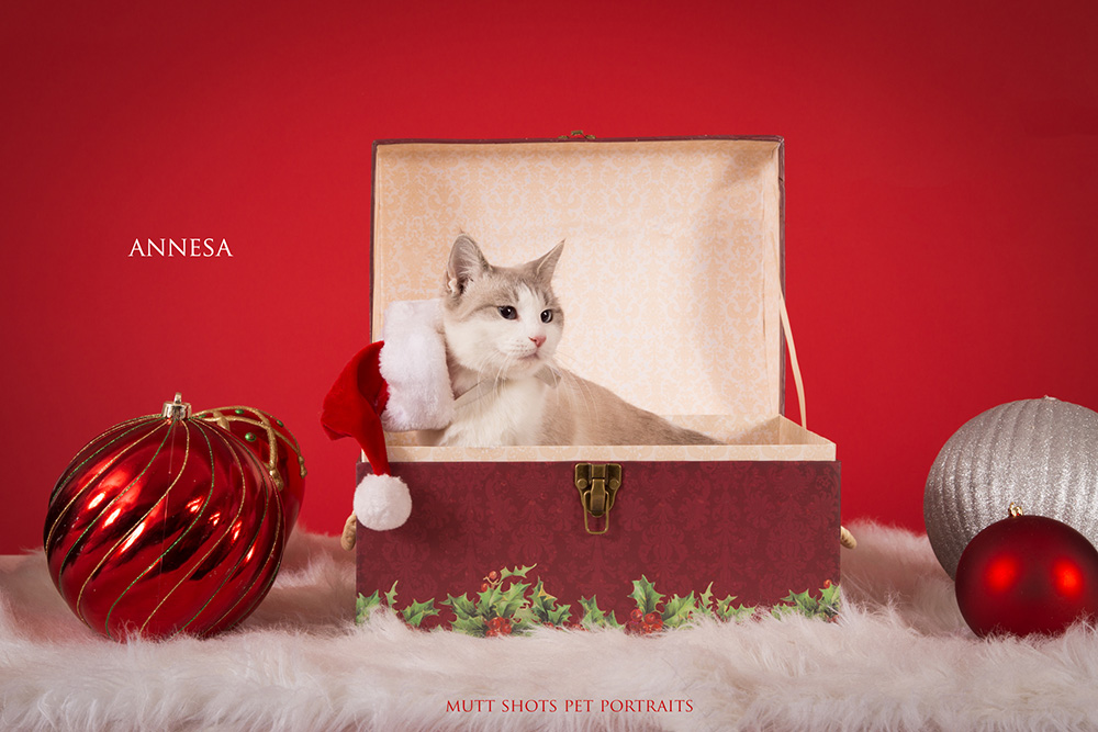 Playful Pets on Primary Red Paper