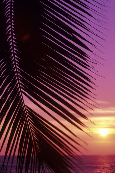 Paradise Sunset Printed Vinyl Backdrop
