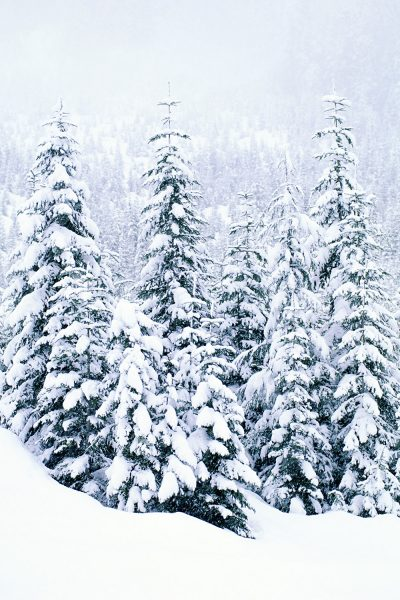 Snow-Covered Trees Printed Vinyl Backdrop