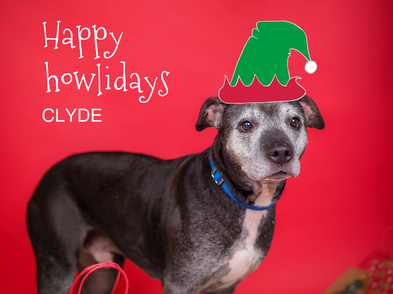 Jolly Holiday Pet Portraits with Primary Red Paper